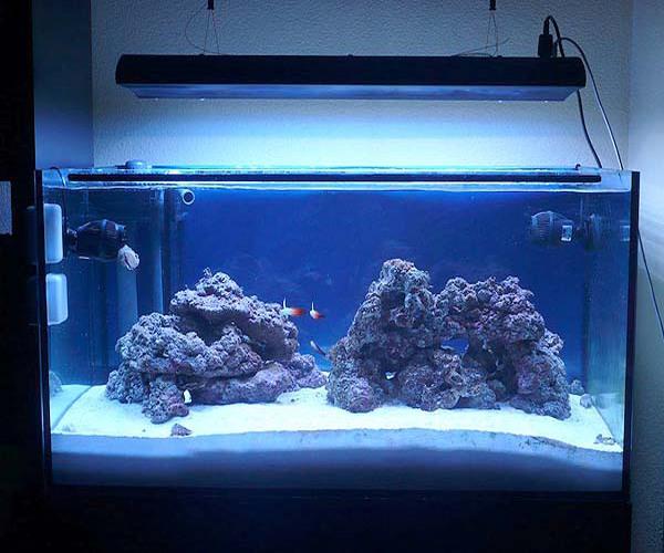 Guia de iluminacion para acuarios marinos plantados for Acuarios ornamentales