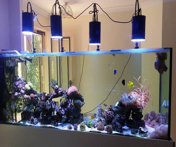 iluminación para acuarios