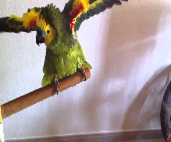 bañar a tu pájaro