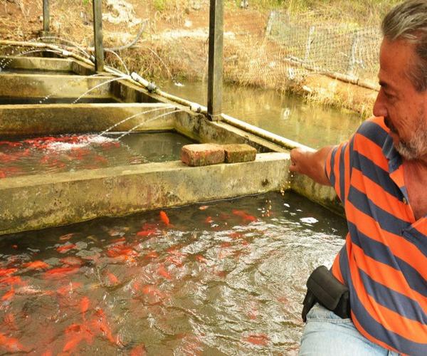Control de depredadores en el estanque