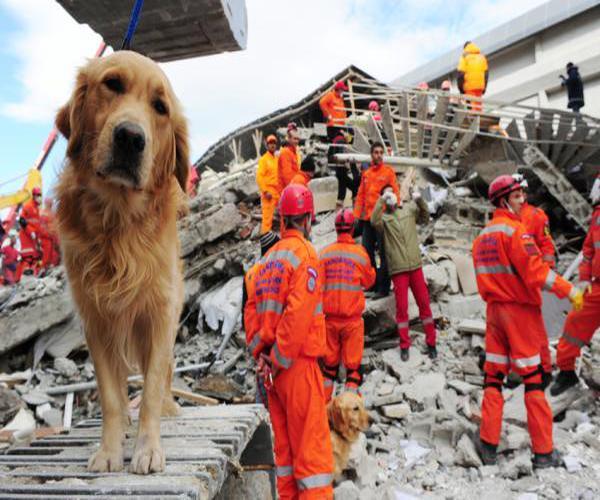mascota puede predecir un terremoto